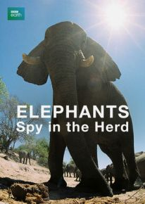 Spy_elephants