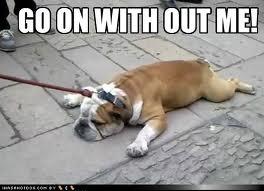 bulldogpuddle