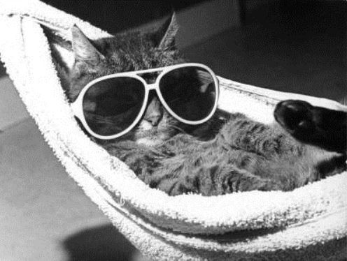 Cat_on_vacation